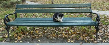 Black and white cat chilling outside. Cool black and white cat sitting at the bench Stock Images