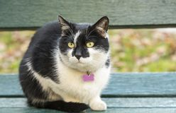 Black and white cat chilling outside. Cool black and white cat sitting at the bench Royalty Free Stock Photo