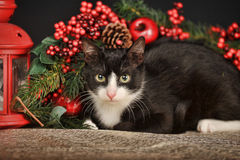 Black and white cat on a Christmas background Royalty Free Stock Photography