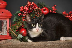 Black and white cat on a Christmas background Royalty Free Stock Image