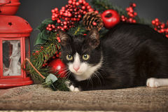 Black and white cat on a Christmas background Stock Images