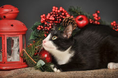 Black and white cat on a Christmas background Royalty Free Stock Images