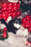 Black and white cat among Christmas gifts Royalty Free Stock Photography