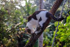 Black and white cat climb the tree. Black and white cat climb down from the tree Royalty Free Stock Photos