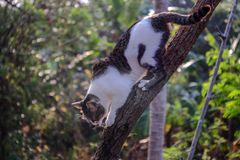 Black and white cat climb the tree. Black and white cat climb down from the tree Royalty Free Stock Images