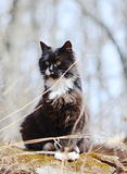 Black and white cat Royalty Free Stock Images