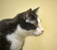 Black white cat Stock Photo