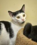 Black white cat Royalty Free Stock Image
