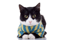 Black and white cat with clothes Stock Photography