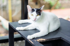 Black and white cat. Cute black and white cat, soft focus royalty free stock photos