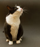 Black and white cat on a dark background Stock Photos