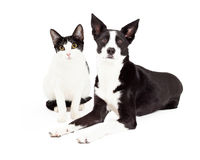 Black and White Cat and Dog Stock Image