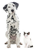 Black and white cat and dog isolated on white Stock Photos