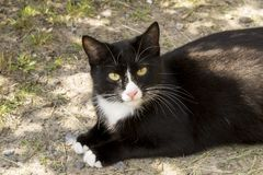 Black and white cat. On earth stock images