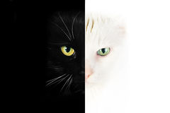 Black and white cat face. Close up portrait of black and white cat royalty free stock photo