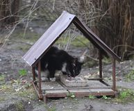 The black and white cat is fed from a homemade street feeder. Made of metal and rebar stock image