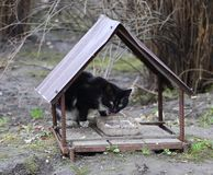The black and white cat is fed from a homemade street feeder. Made of metal and rebar stock photos