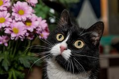 Black and white cat and flowers. stock image