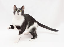 Black and white cat frightened stretches foot Stock Photo