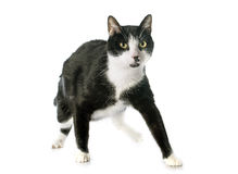 Black and white cat stock photography