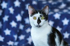 Black and white cat in front of a blue star blanket Stock Photo
