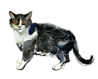 Black and white cat with a full house inside concept. Original waterkolor and ink illustration Stock Photo