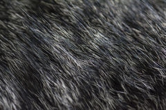 Black and white cat fur texture Royalty Free Stock Photography