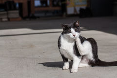 Black and white cat. In garden royalty free stock images
