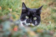 Black and white cat in the garden. stock photography