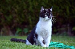 Black and white cat in the garden Stock Image