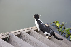 Black and white cat gazing to canal Royalty Free Stock Photo