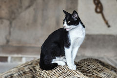 Black and white cat on the Greek island Stock Photos
