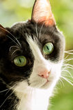 Black and white cat with green background Stock Photography