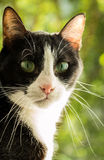 Black and white cat with green background Royalty Free Stock Images