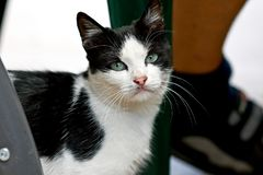 Black and white cat with green eyes. In a blurry background Royalty Free Stock Photo