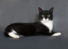 Black and white cat with green eyes lying on gray Royalty Free Stock Photos