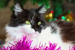 Black and white cat with green eyes lying near Christmas decoration Stock Photography