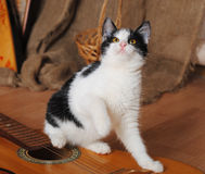 Black and white cat on a guitar in a rustic interior. Black and white cat on a guitar in a vintage rustic interior Royalty Free Stock Images