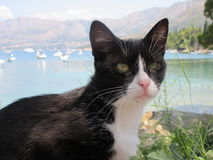 Black and white cat. A handsome black and white cat posing in Cavtat harbour, Croatia royalty free stock images