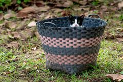 A black and white cat hiding in the basket. royalty free stock images