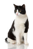 Black and white cat. Isolated on white royalty free stock photo