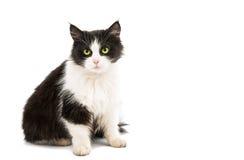 Black & white cat Stock Image