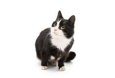 Black & white cat Stock Images