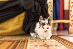Black and white Cat and Kitten. Are sitting on the carpet Stock Photo