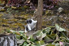 Black and white cat is leaning against a tree in the garden. Cat stock image