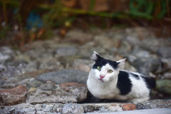 Black and white cat. Lined up on the wall Stock Photography