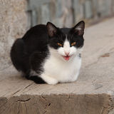 Black and white cat looking at you Stock Images