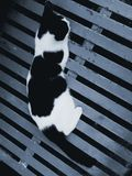 Black white cat lying gray metal. Black and white lying on gray metal Royalty Free Stock Images