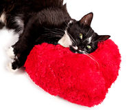 Black-white cat lying on the heart-formed pillow Stock Images