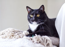 Black and white cat lying on plaid at home. Pets, domestic animals and comfort concept - black and white cat lying on plaid at home stock images